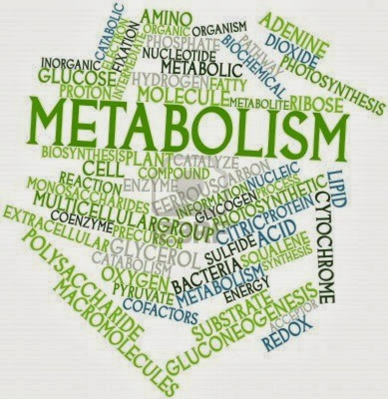 18 Metabolism Boosting Foods